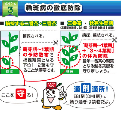 """ポイント3 輪斑病の徹底防除 ■摘採する二番茶・三番茶 萌芽期〜1葉期の予防散布で摘採残葉となる下位1-2葉を守ることが重要です。「萌芽期~1葉期」+「3~4葉期」の体系防除で翌年一番茶の親葉となる越冬葉層を守りましょう。適""""剤""""適所!EBI剤(DMI剤)に頼りすぎは禁物だよ。"""